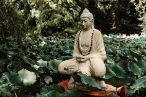 vipassana insight course